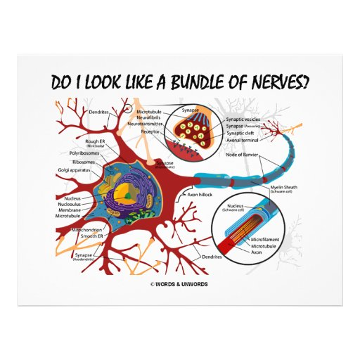 Do I Look Like A Bundle Of Nerves? Neuron Synapse Personalized Flyer