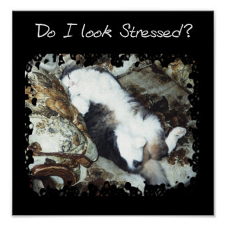 Do I Look Stressed? Poster