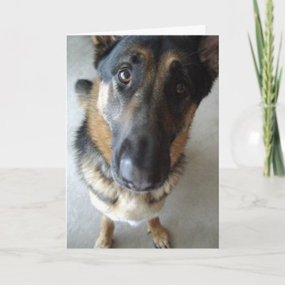 Funny German Shepherd Puppy 30th Birthday Card