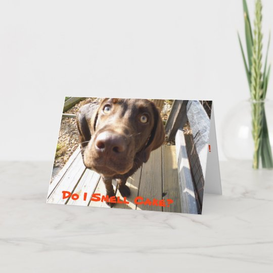 Do I Smell Cake Fun Birthday Card For Dog Lovers Zazzle