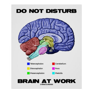 Do Not Disturb Brain At Work Anatomical Humor Poster