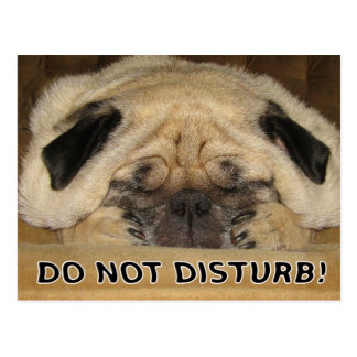 Do Not Disturb Pug Postcard
