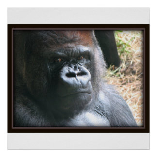 Do not mess with me-- Gorilla print.