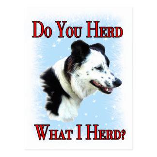 Do you Herd? Postcard