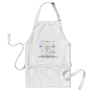 Do You Know About Circulation In Macroeconomics? Adult Apron