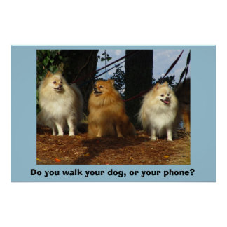 Do you walk your dog, or your phone? poster
