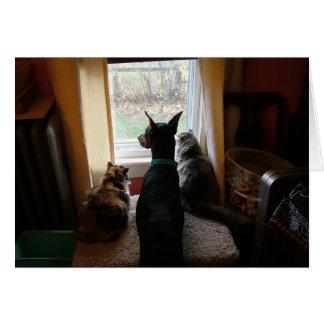 Doberman and Cats Card