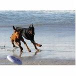 Doberman and Rhodesian Ridgeback - Frisbee Play Cut Out