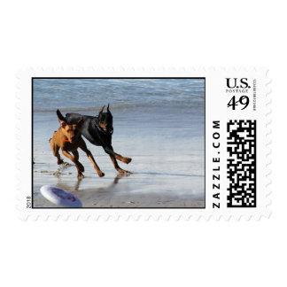 Doberman and Rhodesian Ridgeback - Frisbee Play Postage Stamp
