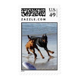 Doberman and Rhodesian Ridgeback - Frisbee Play Stamps