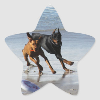 Doberman and Rhodesian Ridgeback - Frisbee Play Star Sticker