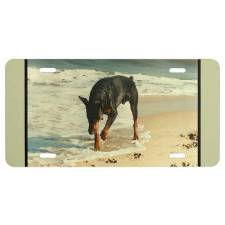 Doberman at the Beach Painting Image License Plate