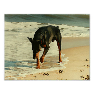 Doberman at the Beach Painting Image Posters