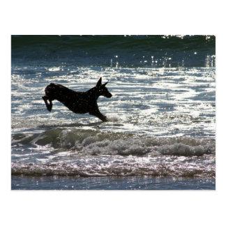 Doberman - Black - Ocean Leap Postcard