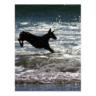 Doberman - Black - Ocean Leap Post Cards