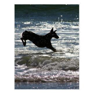 Doberman - Black - Ocean Leap Postcards