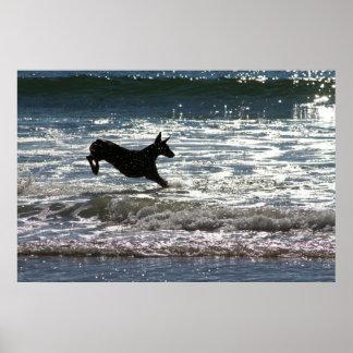 Doberman - Black - Ocean Leap Posters