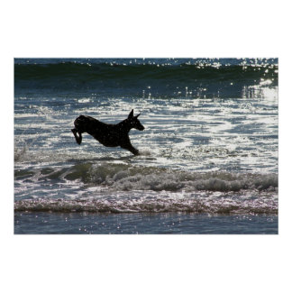Doberman - Black - Ocean Leap Poster