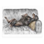 Doberman divertido en el sofá postales