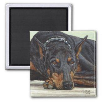 Doberman Dog magnet magnet