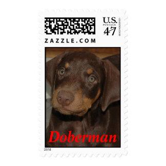 Doberman Dog Puppy, Doberman Postage