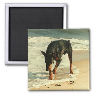 Doberman en la imagen de la pintura de la playa iman