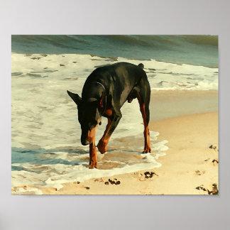 Doberman en la imagen de la pintura de la playa poster