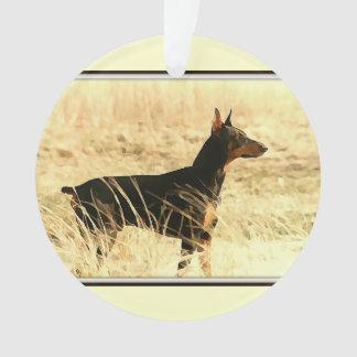Doberman en las cañas secas que pintan imagen