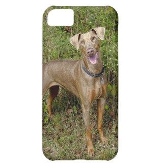 Doberman Fawn Rescue iPhone 5C Covers