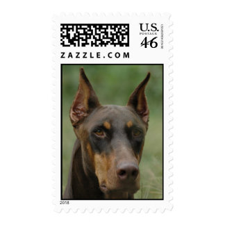 Doberman Head Postage Stamp
