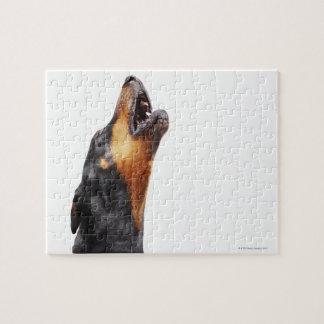 Doberman howling, close-up jigsaw puzzle
