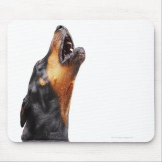 Doberman howling, close-up mouse pads