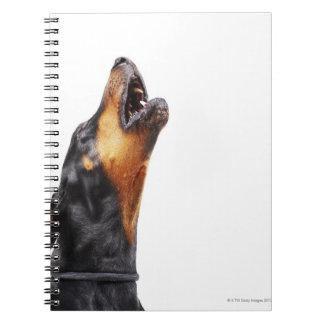 Doberman howling, close-up notebook