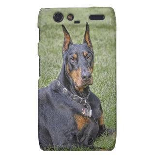 Doberman in Grass Motorola Droid RAZR Cases