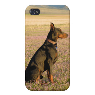 Doberman iphone case cases for iPhone 4