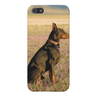 Doberman iphone case cover for iPhone 5
