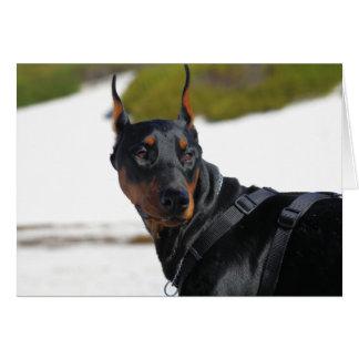 Doberman - negro - carretón tarjeta pequeña