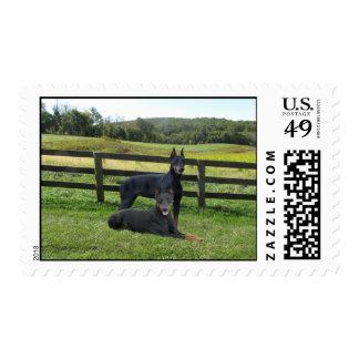 Doberman Pinscher Buddies Postage Stamp