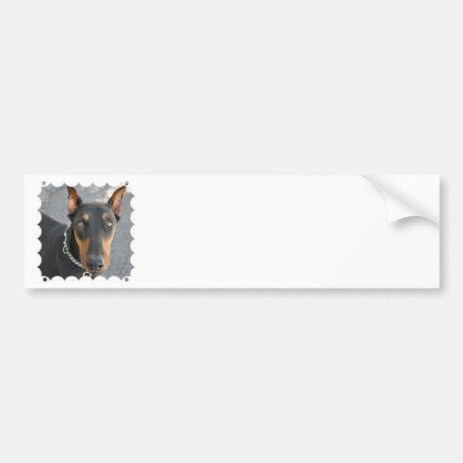 Doberman Pinscher Bumper Sticker