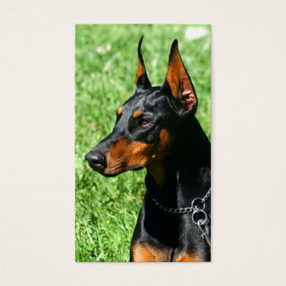 Doberman Pinscher business cards
