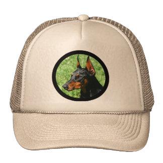doberman pinscher hat