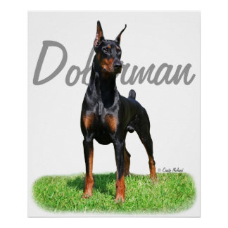 Doberman Pinscher image with name graphic text Poster