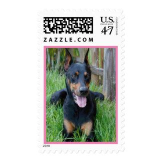 Doberman Pinscher Puppy Dog Postage Stamps
