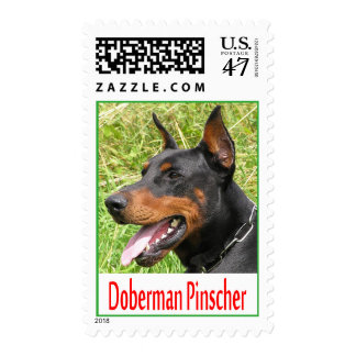 Doberman Pinscher Puppy Dog Postage Stamps