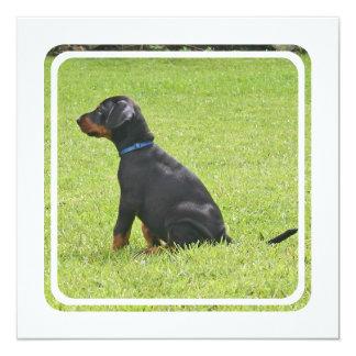 """Doberman Pinscher Puppy Invitation 5.25"""" Square Invitation Card"""