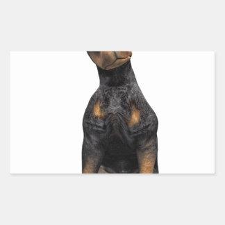 Doberman Pinscher Puppy Sitting Rectangular Sticker