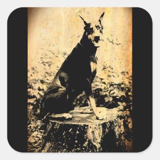Doberman Pinscher Vintage Old Photo Square Sticker