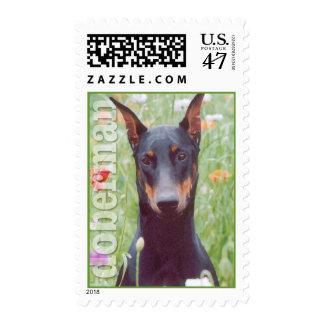 Doberman Portrait in flowers Postage Stamp