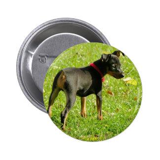 Doberman Puppies Round Button