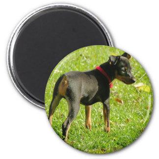 Doberman Puppies Round Magnet